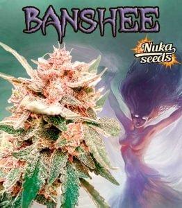 banshee cannabis strain