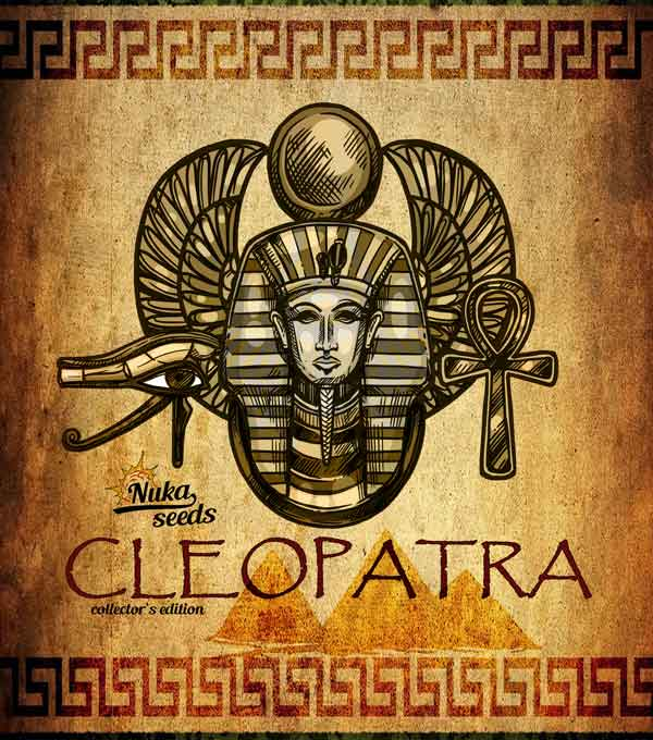 Cleopatra cannabis seeds box by nukaseeds