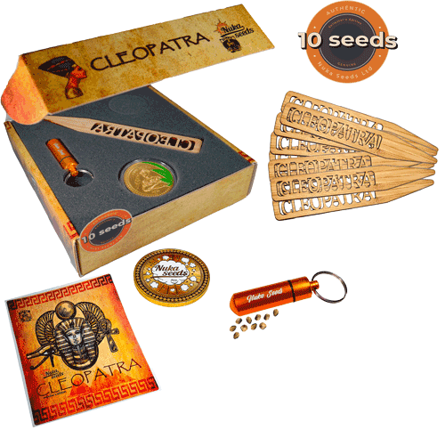 Cleopatra cannabis seeds doypack 10pc