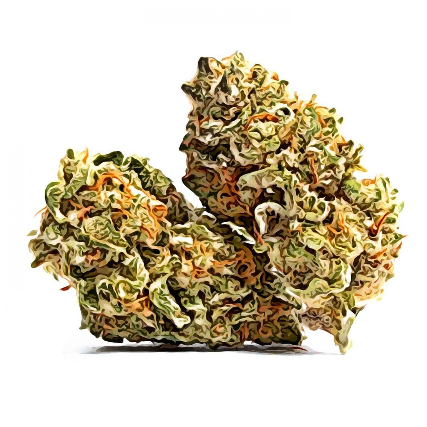 Cleopatra CBD cannabis strain