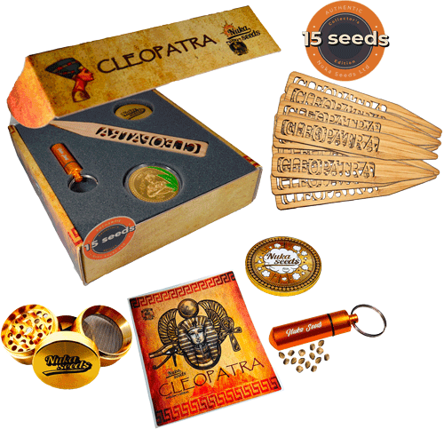 cleopatra cannabis seeds box 15 seeds