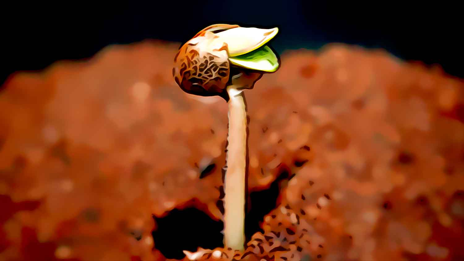 """Featured image for """"How to germinate Cleopatra cannabis seeds?"""""""