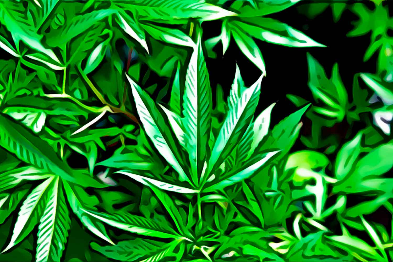"""Featured image for """"Cleopatra cannabis seeds – growers report"""""""