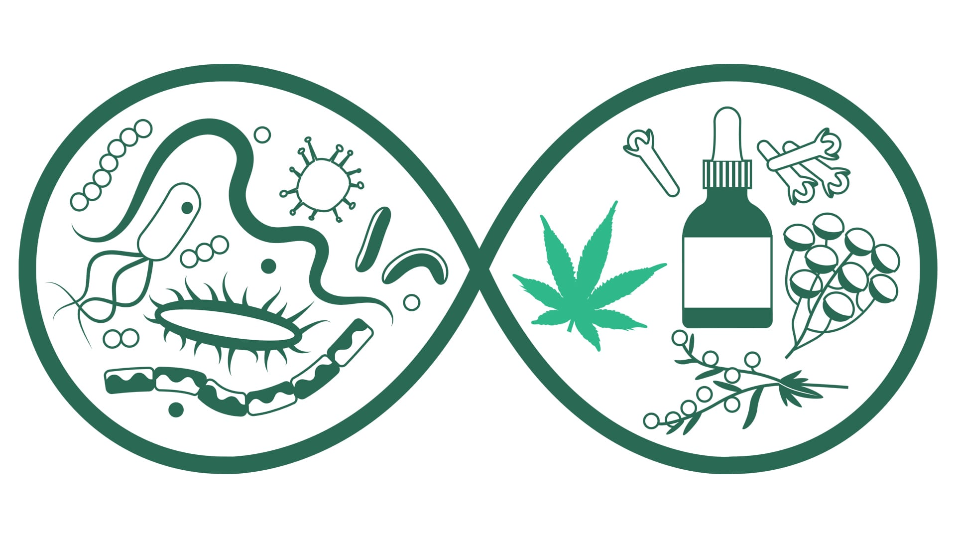 """Featured image for """"cannabis and antibiotics – can we use them both?"""""""